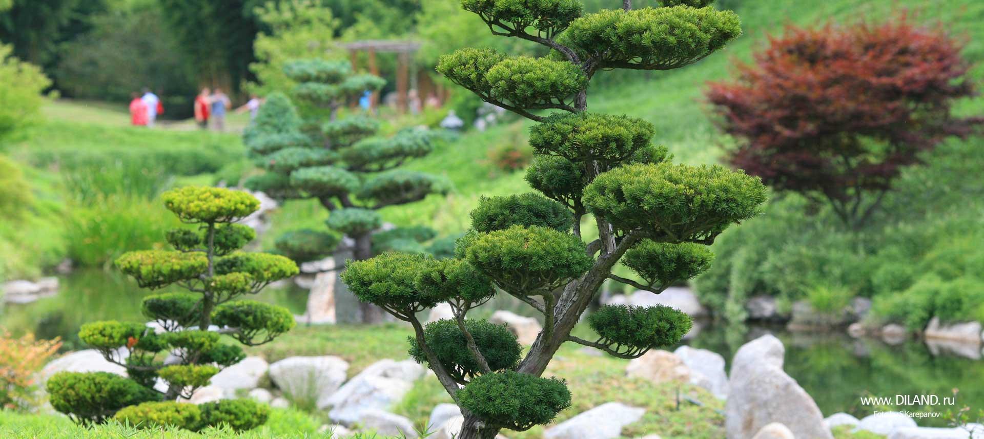 японский сад бонсай