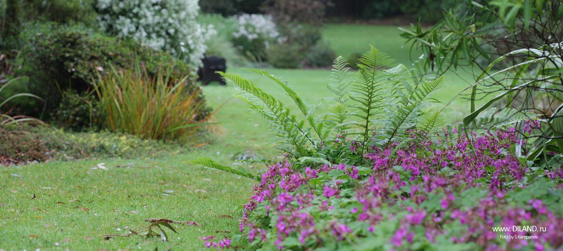 озеленение газона фото