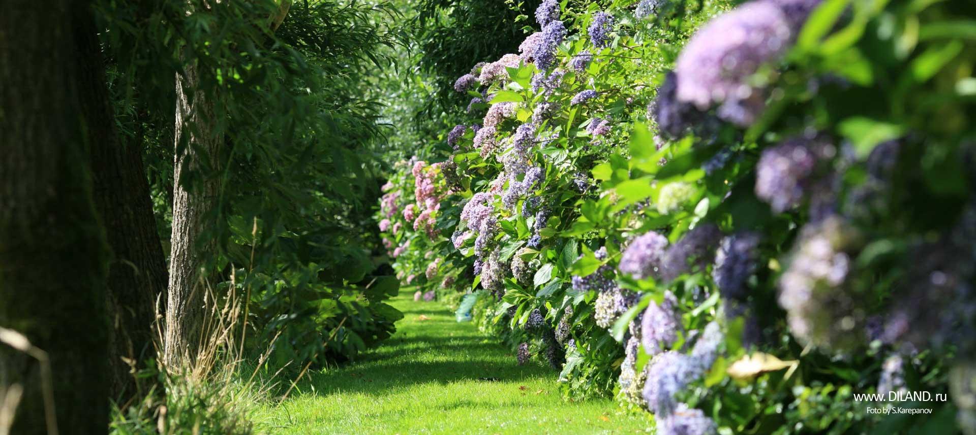 озеленение дворовых территорий фото