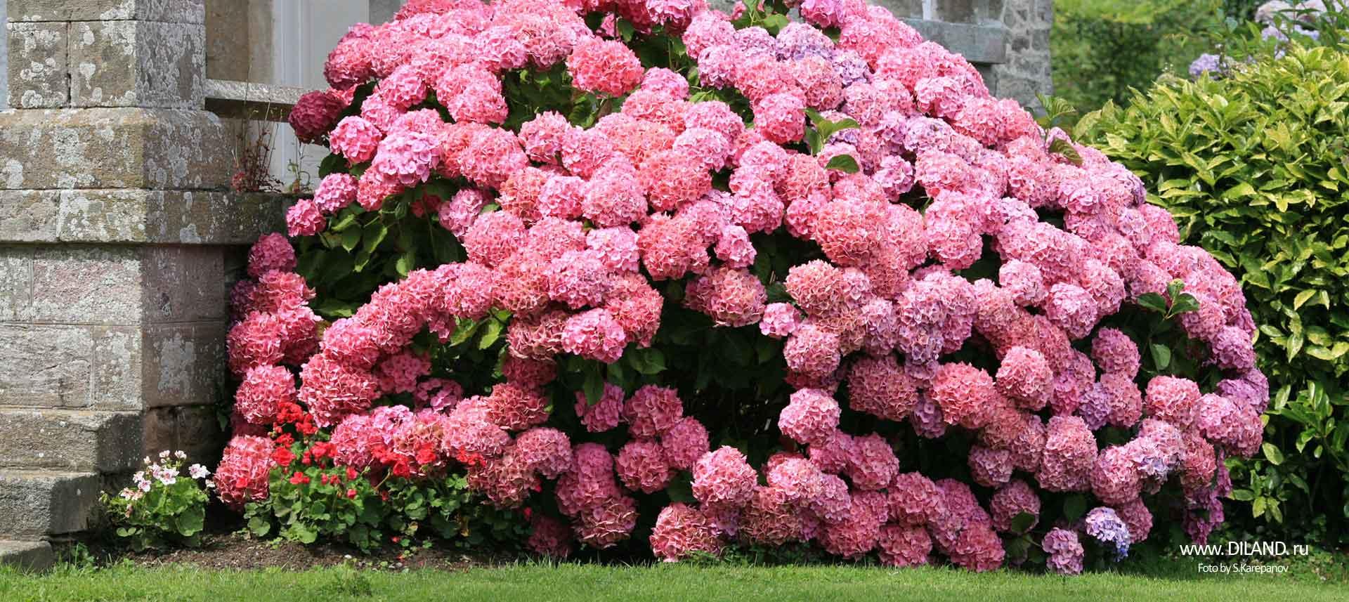 цветочное озеленение фото