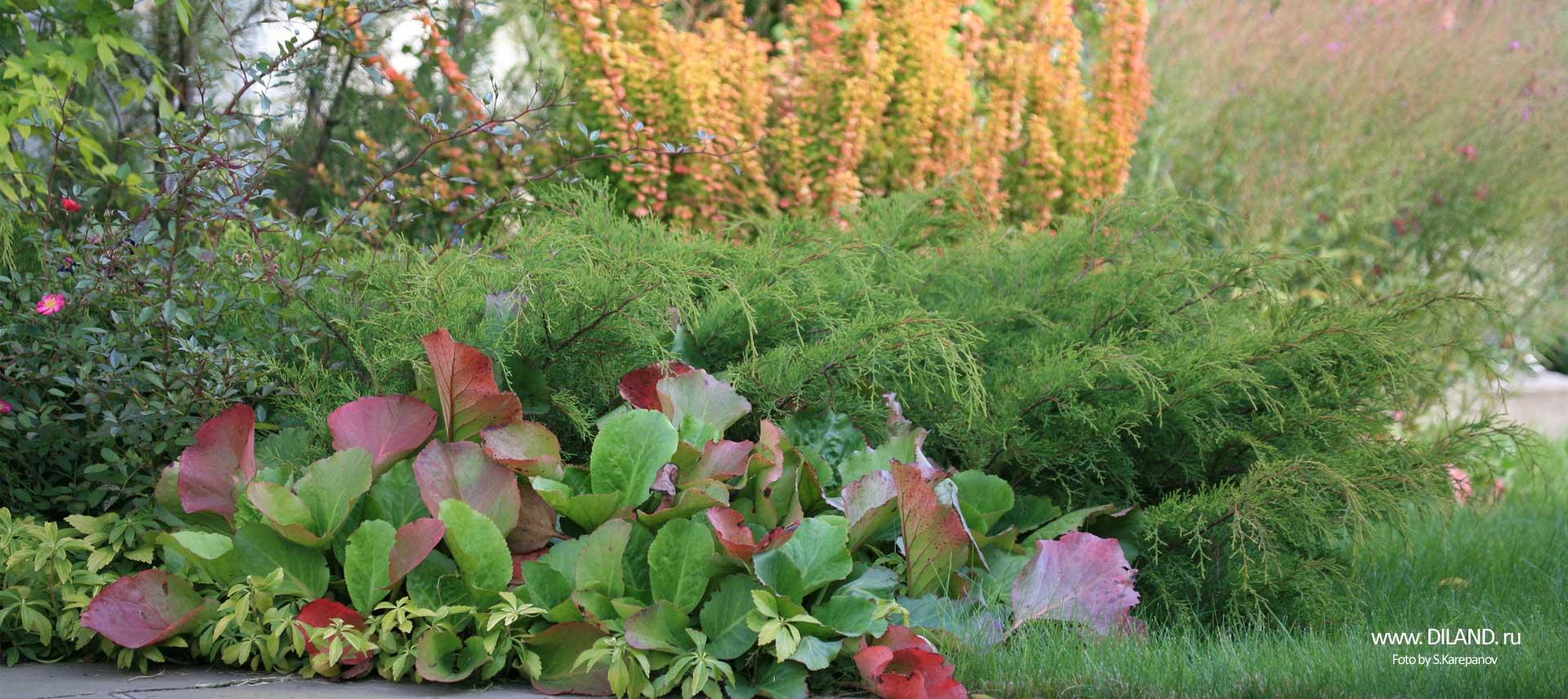 озеленение участка фото