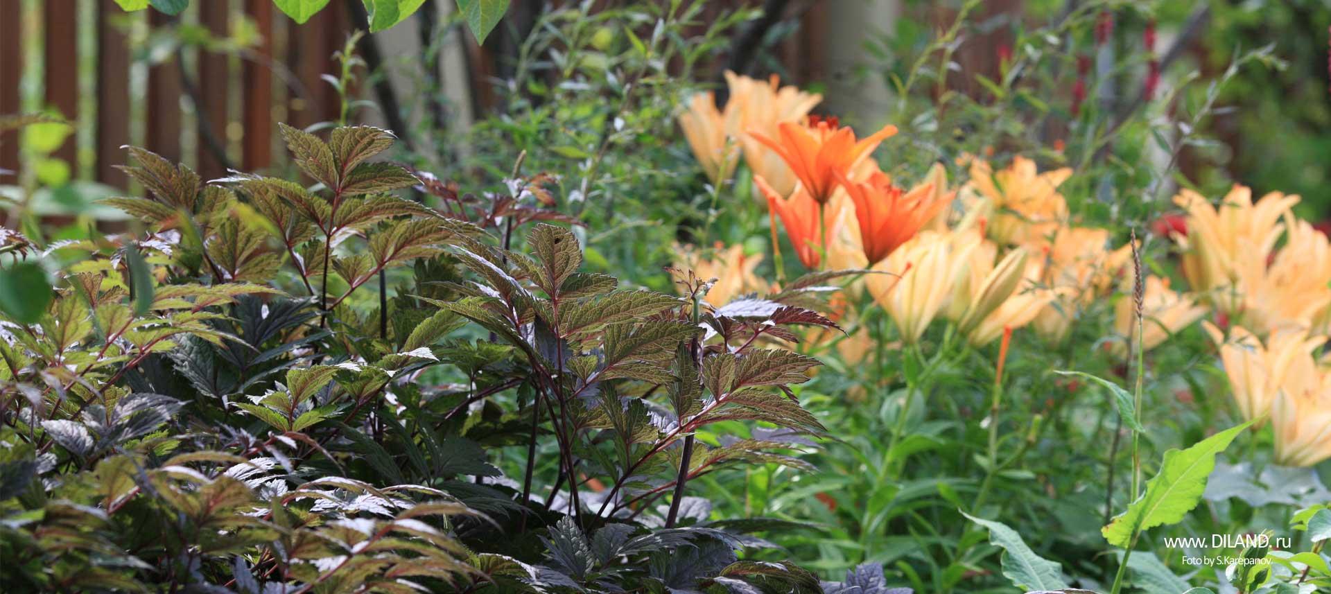 садовые цветы ландшафтный дизайн