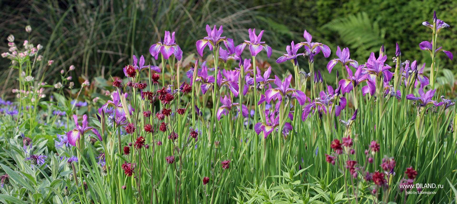 благоустройство цветника