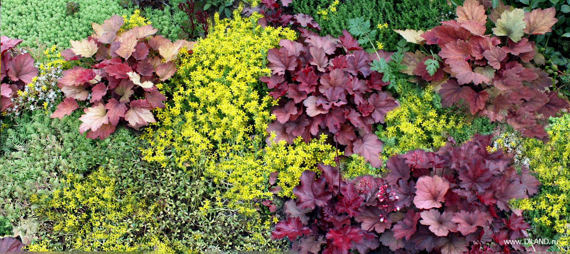 Красивые цветы у дома